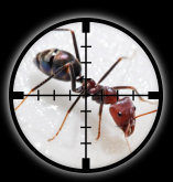 Targetted Pest Control - Ant Extermination in Stoke on Trent