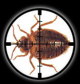 Targetted Pest Control - Bed Bug Extermination