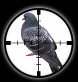 Targetted Pest Control - Bird Control and Bird Proofing Systems in Stoke on Trent