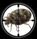Targetted Pest Control - Carpet Beetles and Wooly Bears