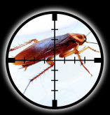 Targetted Pest Control - Cockroach Extermination