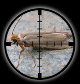 Targetted Pest Control - Moth Extermination in Stoke on Trent