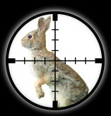 Targetted Pest Control - Rabbit Extermination in Norwich
