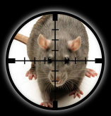 Targetted Pest Control - Rat Extermination in Stoke on Trent