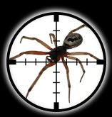 Targetted Pest Control - Spider Extermination in Stoke on Trent