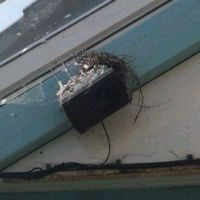 Pigeon Nesting in a Shopping Centre