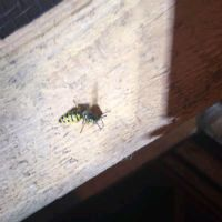 Wasp in a loft space