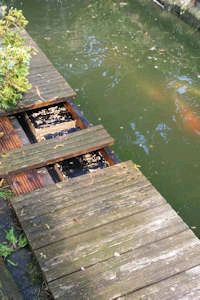 Wasp nest removal from decking near a fish pond