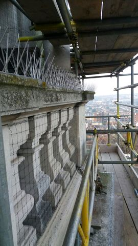 Bird Proofing at Colchester Town Hall